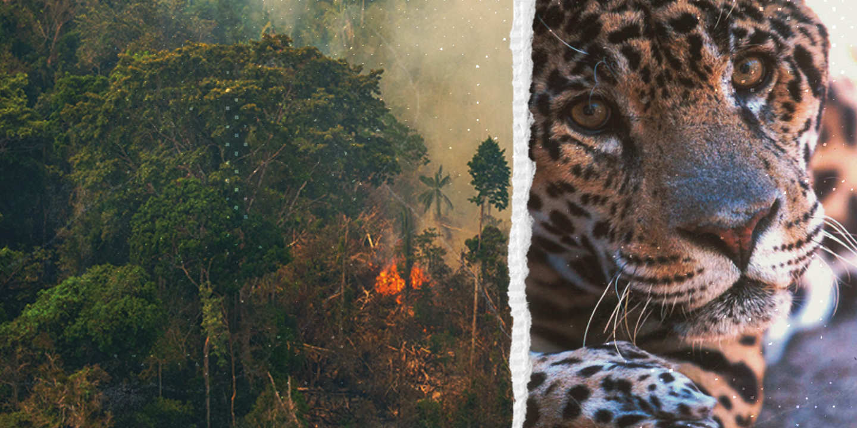 skydda amazonas nej till handelsavtalet eu-mercosur