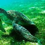Vi behöver ett vaccin för våra hav