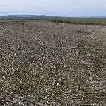 Greenpeace svar på skogsutredningen