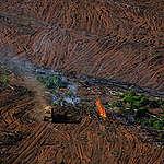 Skövlingen av Amazonas slår nytt rekord – urfolk stämmer regeringen