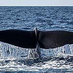 Vackra bilder från outforskat ekosystem i Indiska oceanen