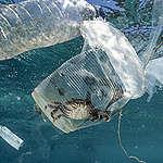 Plast i haven: Fakta och konsekvenser