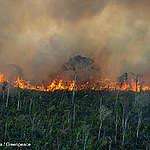 Omfattande bränder i Amazonas samtidigt som regnskogen läcker mer koldioxid än vad den binder