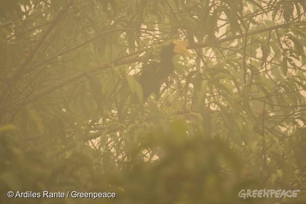 霧霾森林中的犀鳥