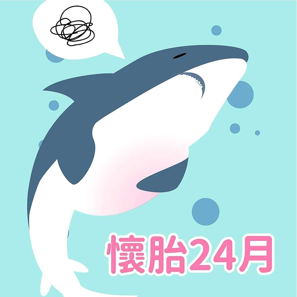 鯊魚趣味小知識:懷胎24個月?以魚類來說,鯊魚是繁衍能力較弱的物種,生產前要懷孕兩年,比鯨魚或大象都還要長。有些小鯊魚在媽媽肚子裡時還會吃掉其他手足,爭取被生下來、存活的機會。