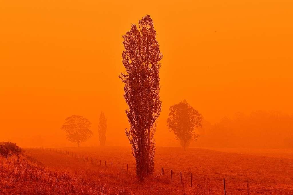 澳洲大火造成嚴重空氣污染,天空一片橘紅灰暗。