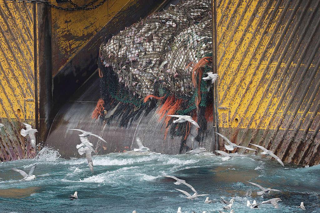 巴倫支海(Barents Sea)中利用底拖網捕魚的漁船。