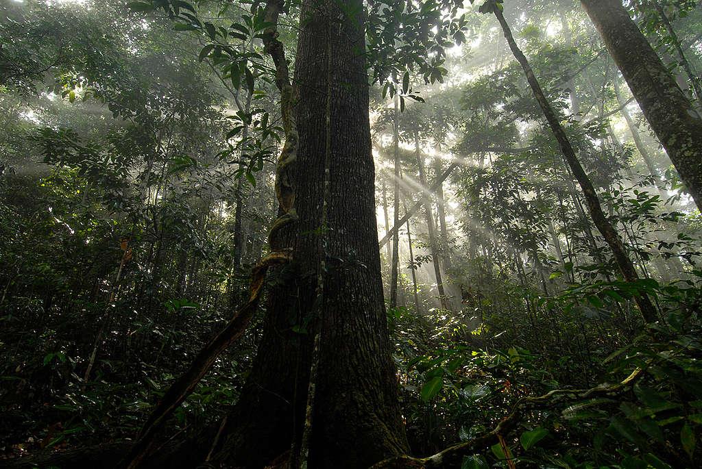 亞馬遜雨林是地球珍貴的廣闊森林之一。樹木具有儲存二氧化碳的功能,因此為減緩氣候變遷,我們也必須保護森林。