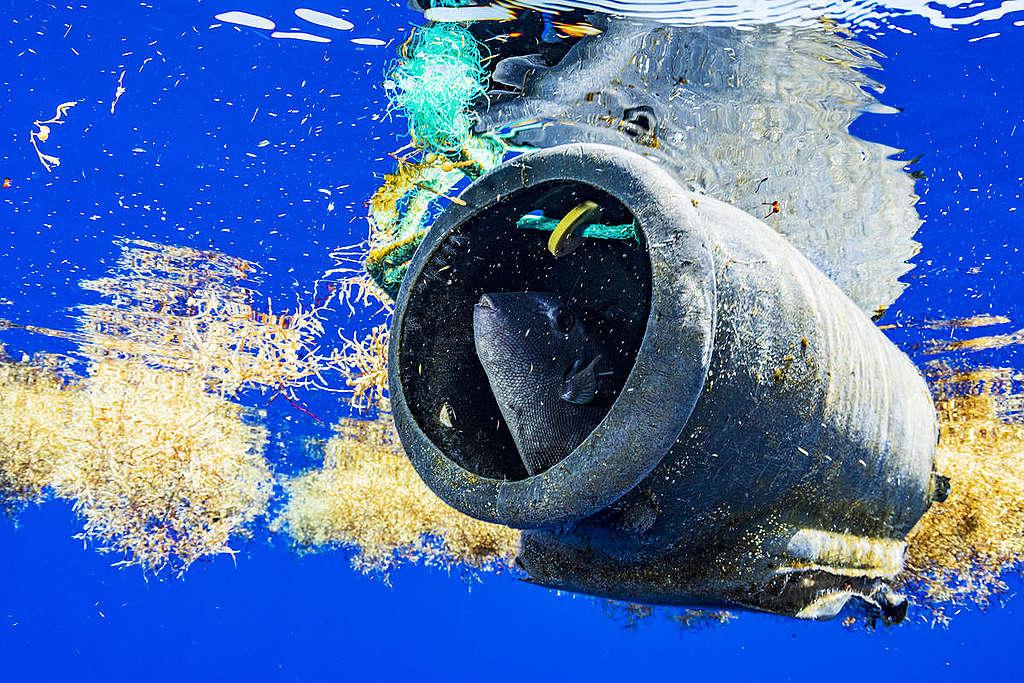 海洋中的塑膠垃圾已嚴重侵擾生態健康。