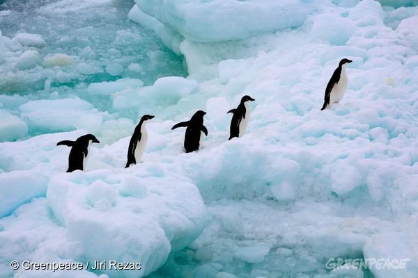 南極是許多珍貴企鵝及鳥類的棲息地,需要您我極力守護。