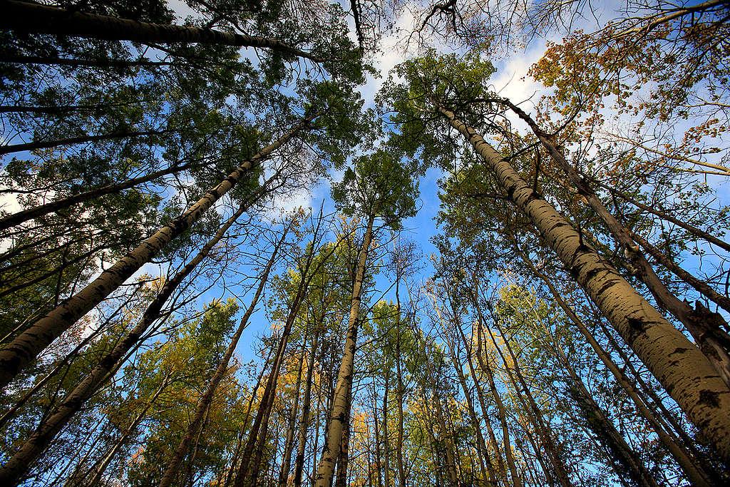 若要將地球升溫控制在攝氏 1.5 度之內,除了要保護森林,更要確實降低碳排放量。