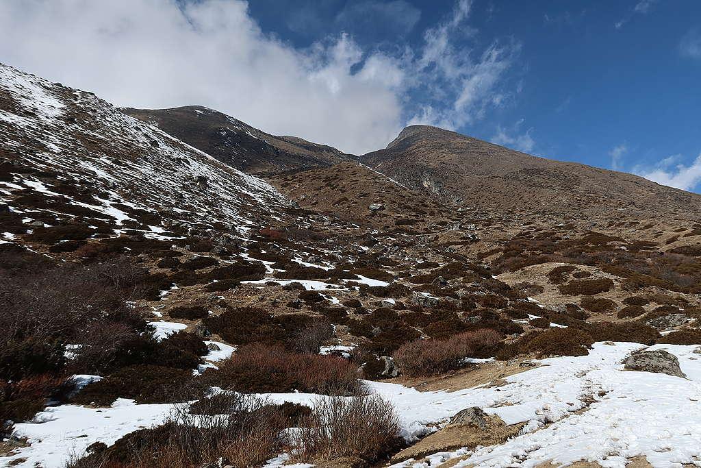 超過4,500公尺的高山區域,長年積雪消融得快,四處可見褐紅色的灌木叢和裸露的植被。