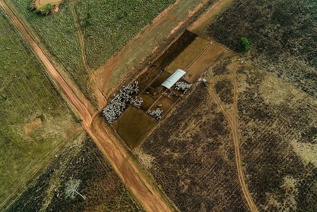 巴西亞馬遜廣大林地因非法砍伐、非法採礦、毀滅性焚燒、設置大片養牛場等原因,受到人類入侵、毀壞生態棲地。