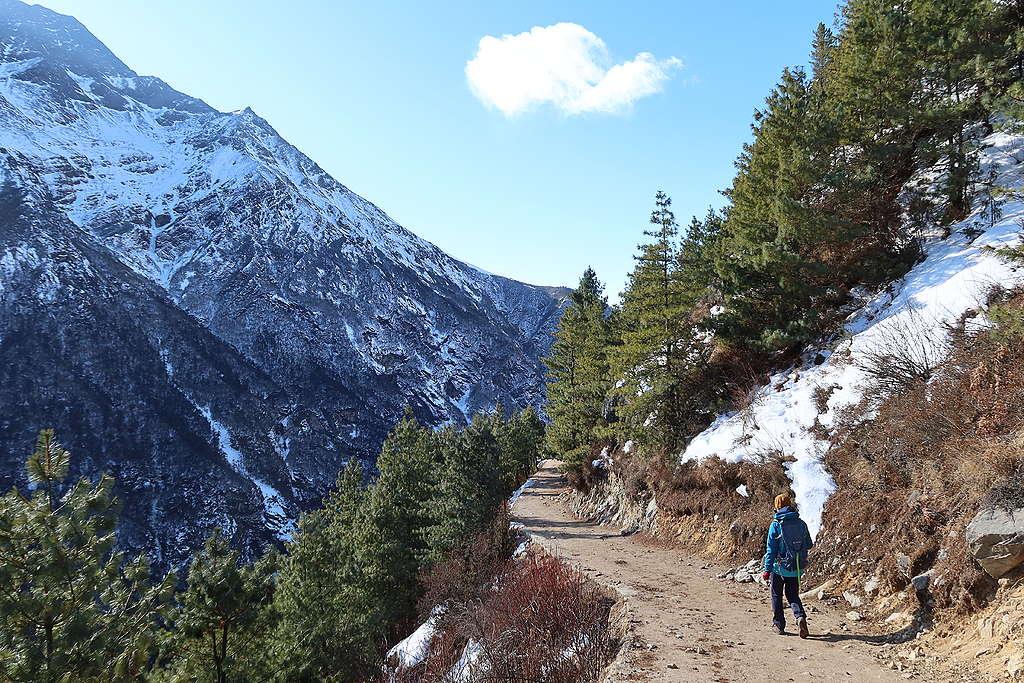 在海拔4,000公尺的亞高山帶林線上,陽光照耀在茂密的針葉林,融雪約莫到中午就會消失。
