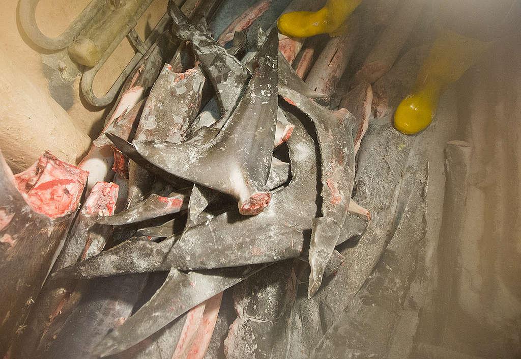 臺灣延繩釣漁船捕撈到的鯊魚