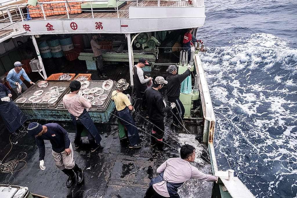 綠色和平在海上經歷了一個月,觀察鯊魚死亡背後的秘密作業。