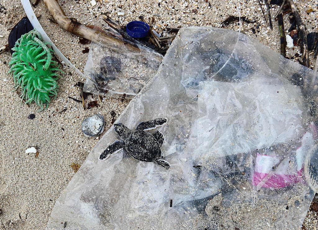 塑膠垃圾進入生態環境,而且難以分解,必須從源頭減量以及找到永續的替代途徑。