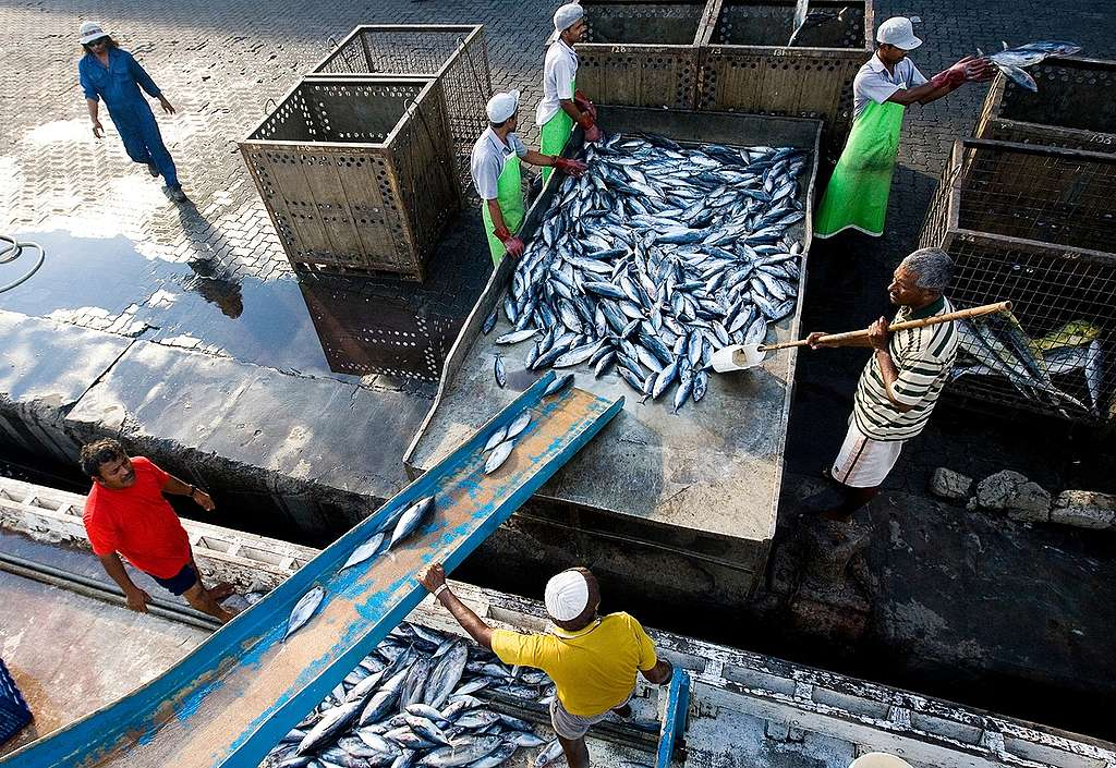 十億美元的漁業市場,多數是由剝削漁工權益換來的。
