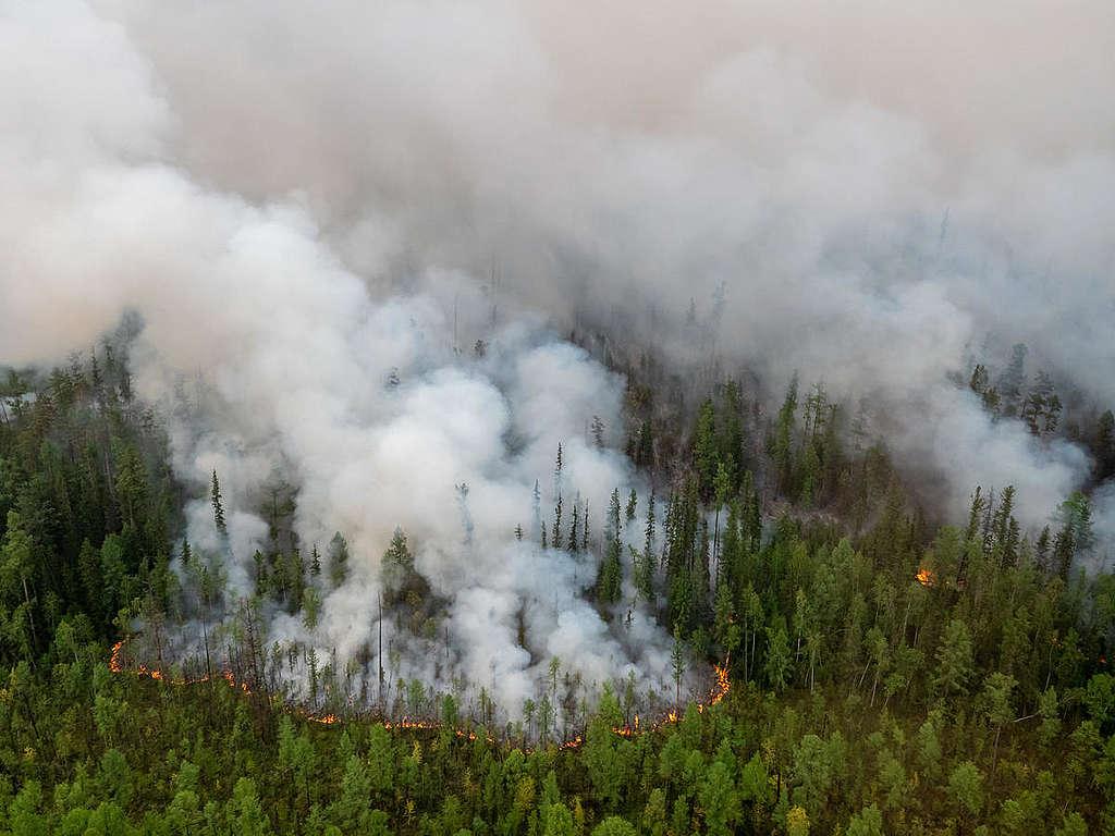 2019年8月,西伯利亞針葉林發生大火,綠色和平調查人員前往紀錄災況,當時已燃燒130萬公頃林地,相當於1/3個臺灣。