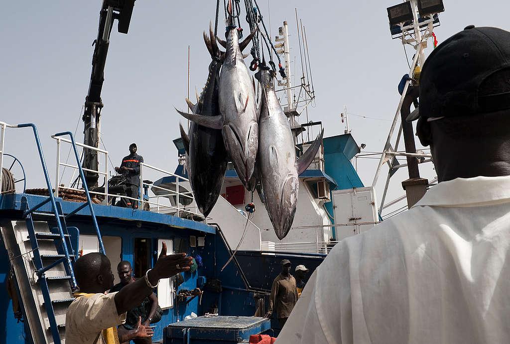 大型公司壟斷漁獲,甚至出現非法、未通報、未受規範的捕魚活動。