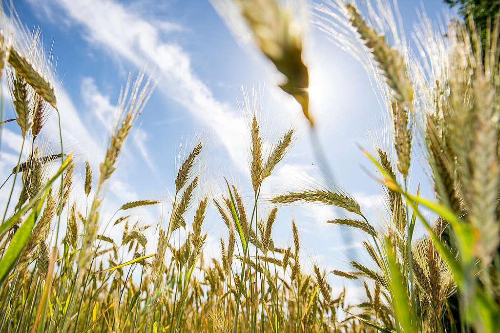 農業革命以來,人類仰賴大自然的能源,陽光、風能,以種植、烹飪與取暖。