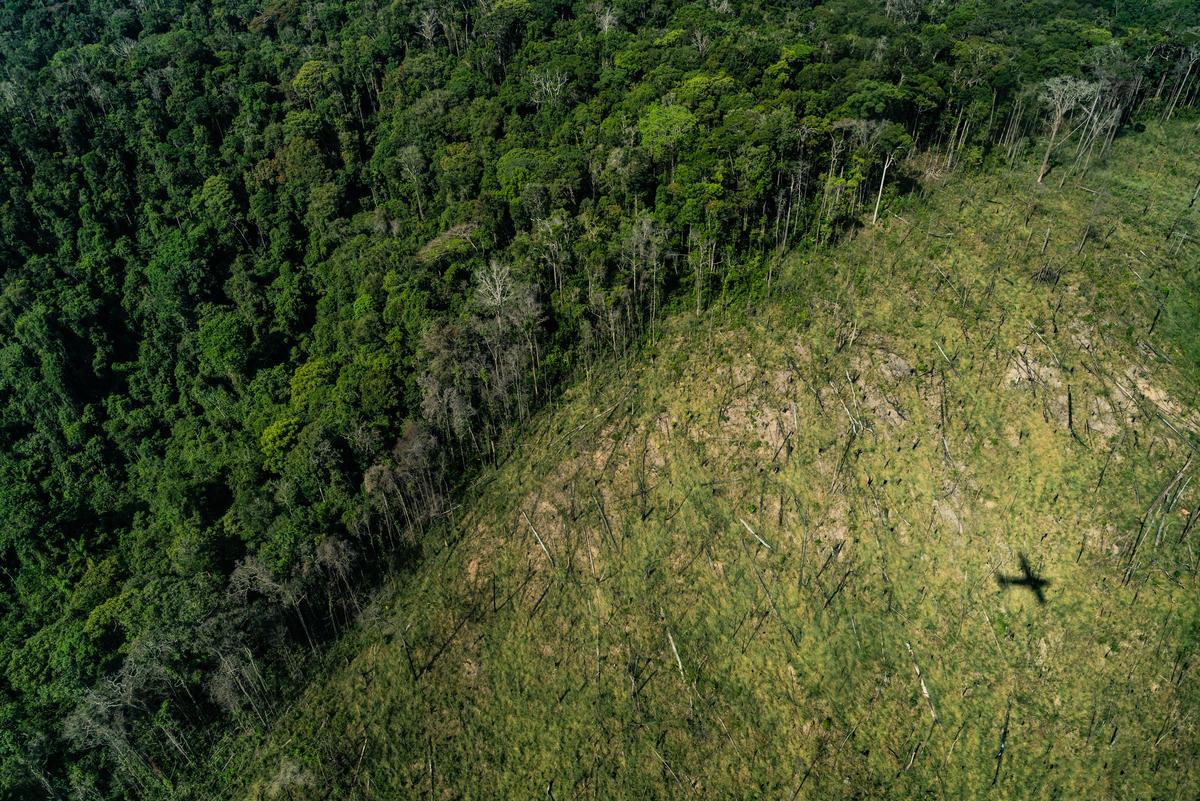 巴西亞馬遜的毀林情況嚴重,但現在改變還來得及,需要全球公眾持續為森林請命,還給她休養生息的機會。