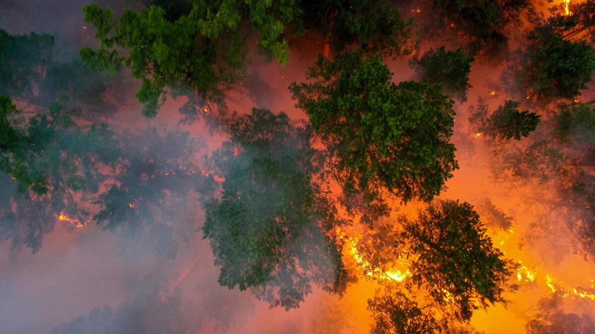 綠色和平發起公眾連署,與大眾一起要求政府撲滅火勢、增加保護森林的預算,積極減緩氣候變遷風險。
