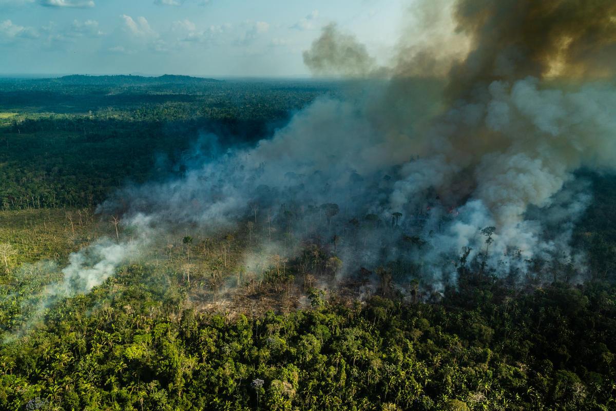 2019年9月,綠色和平調查人員實地前往巴西亞馬遜森林,空拍紀錄大火災況,證實與砍伐和畜牧業有關。