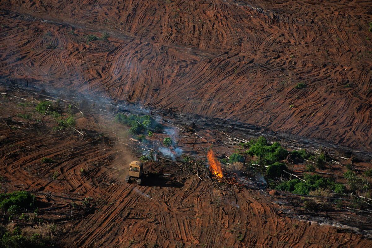 巴西亞馬遜遭毀林,與肉品和大豆飼料關係密切,卻得到政府姑息,無視生態、原住民人權與氣候危機。