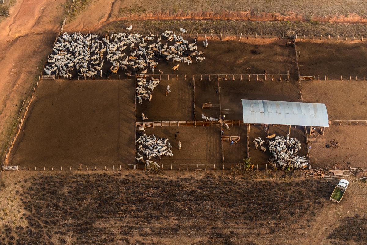 畜牧業是造成亞馬遜毀林的主因之一,而歐洲銀行與金融集團竟提供 Marfrig、 Minerva 及 JBS 等牛肉加工巨頭企業大筆資金。