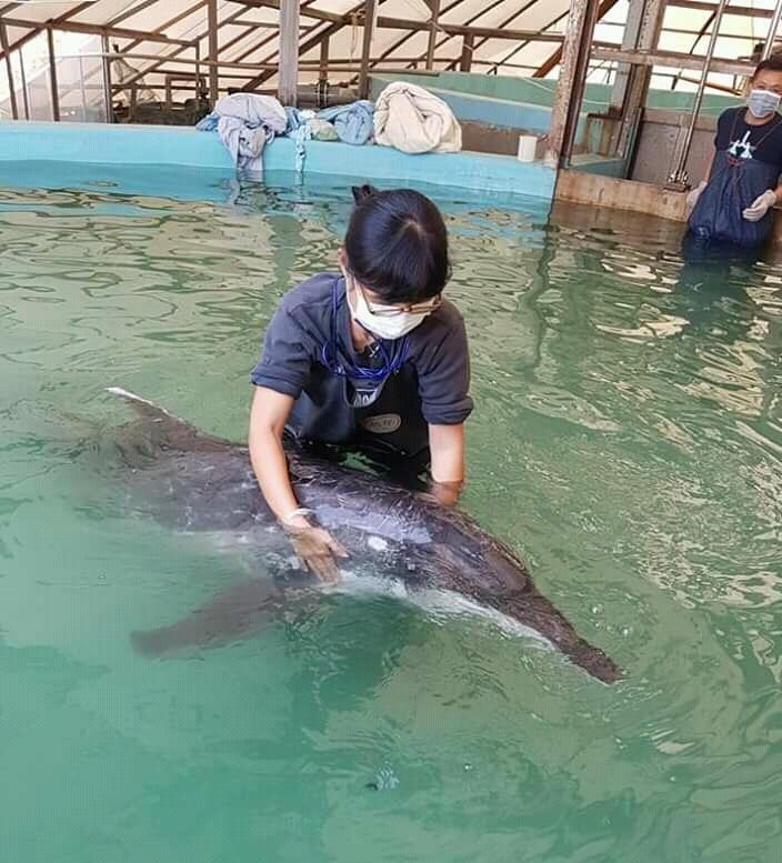 小豚(黃懿萱)從小就非常喜歡海豚,照片攝於成大海洋暨鯨豚研究中心的擱淺救援池。