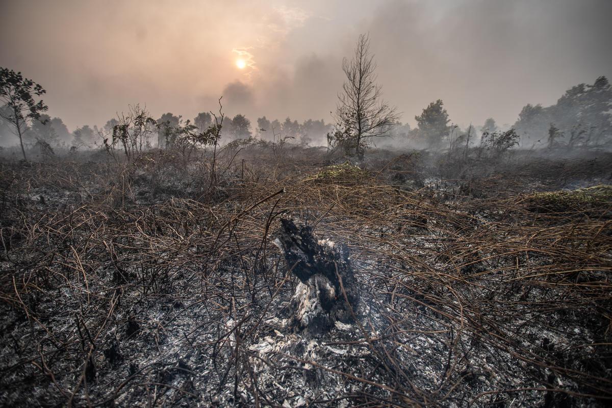 2019年11月,泥炭地被大火燒得剩下一片焦黑,肇事企業卻無須確實支付相關罰金或懲戒。