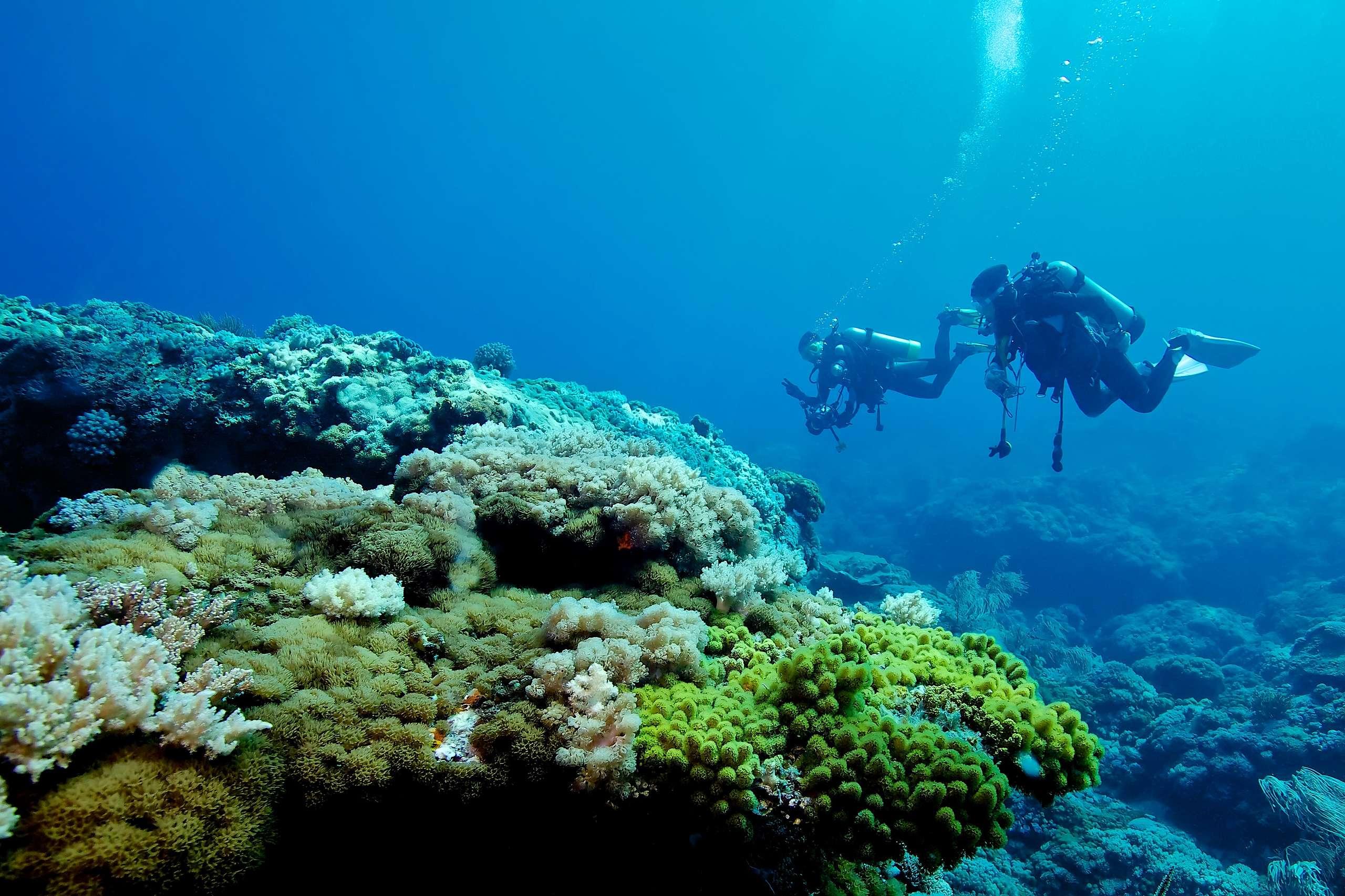 綠島擁有美麗珊瑚礁,是潛水勝地,遊客更應該愛惜珍貴生態。