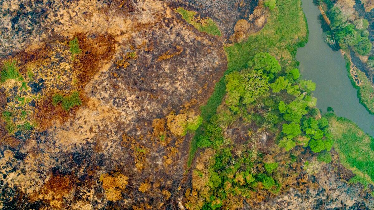 2020年,巴西中西部地區世界上最大的濕地潘塔納爾(Pantalal)遭大火焚燒約230萬公頃,嚴重影響當地的野生動植物。