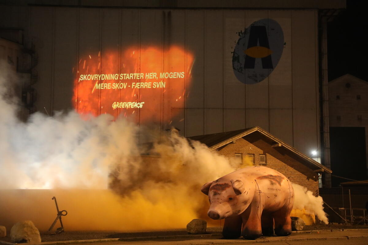 丹麥奧胡斯:奧胡斯港口是丹麥進出口大豆飼料和豬肉的主要港口,以應付丹麥龐大的工業肉品生產,其中包括來自亞馬遜和南美所種植的大豆,而種植大豆是造成亞馬遜等地大火的因素之一,因此綠色和平投影要求政府減少肉品生產、逐步淘汰大豆進口,拒絕成為亞馬遜毀林幫兇。