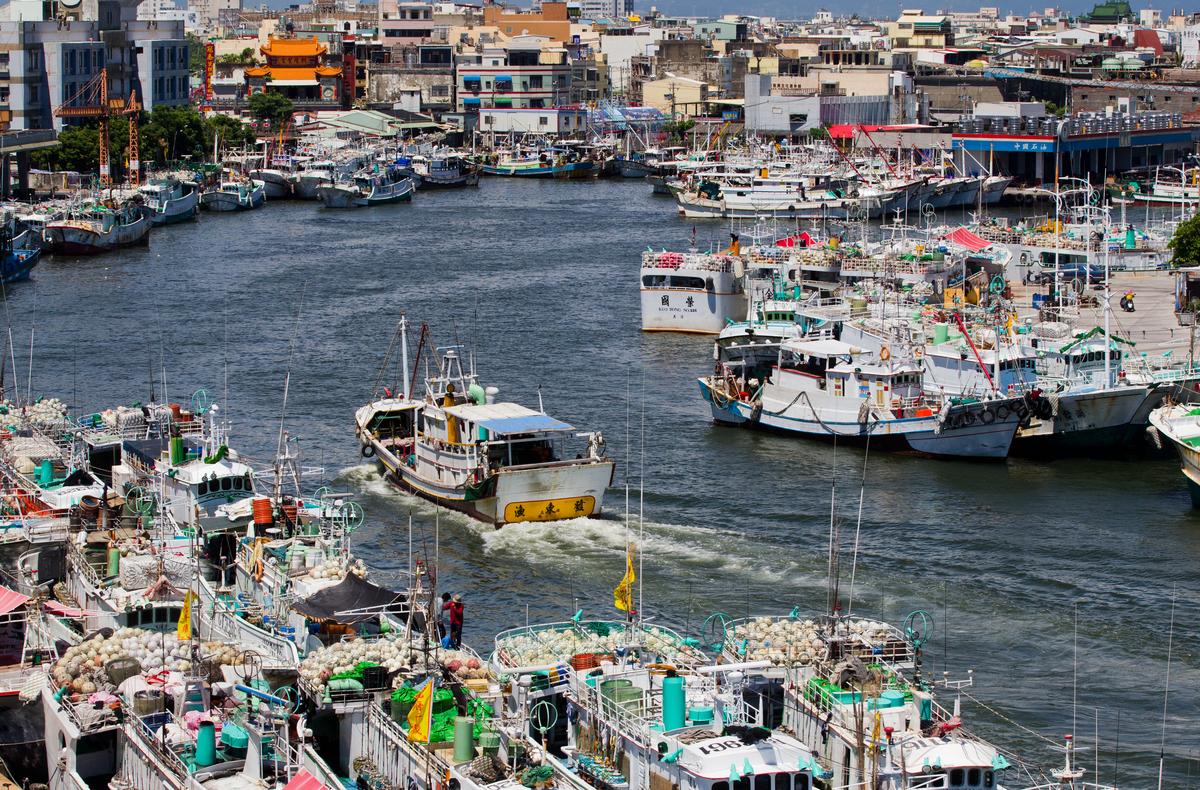 東港是臺灣黑鮪魚主要捕獲地,全盛時期每年漁獲量破萬,然而 90 年代以後,黑鮪魚數量逐年以千數遞減,已不復昔日盛況。
