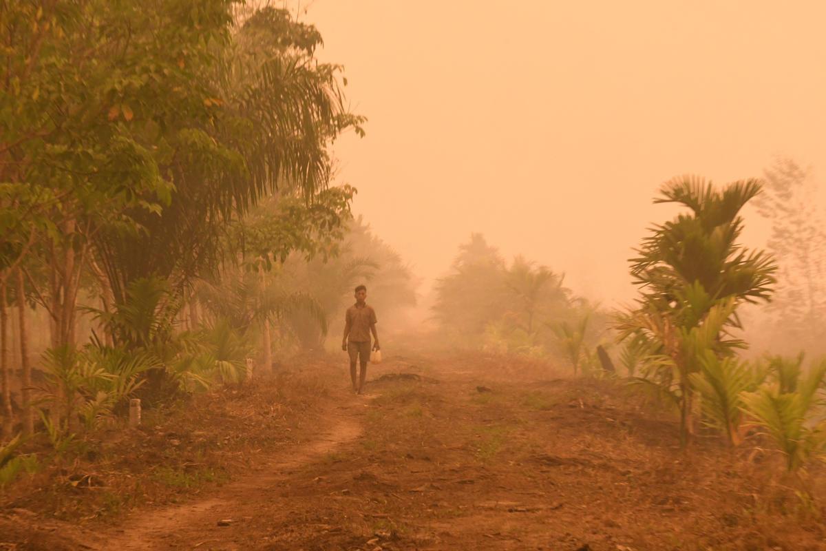 印尼蘇門答臘的村民走在棕櫚油企業所屬的種植區,空氣中瀰漫鄰近泥炭地大火所製造的濃煙。為了商業利益犧牲環境生態與人民健康,將為印尼帶來更多風險。