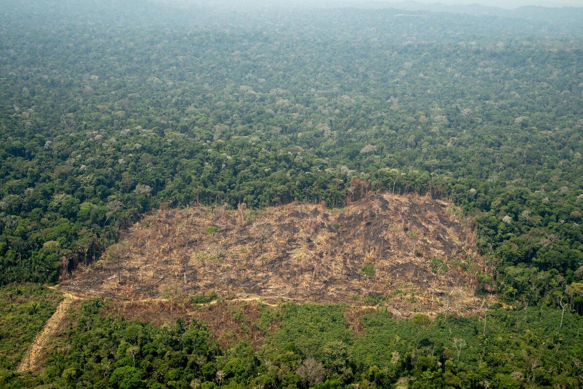 2020年9月1日,綠色和平飛越巴西亞馬遜卡里普納原住民土地,調查並記錄毀林現況,發現大片林地已被砍伐破壞。