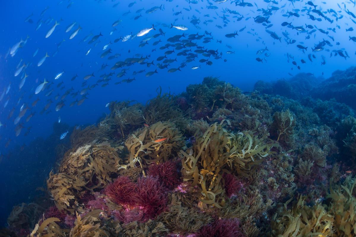 南大西洋的維瑪海山,擁有豐富的生物多樣性,卻因遭到工業捕魚受到生存威脅。