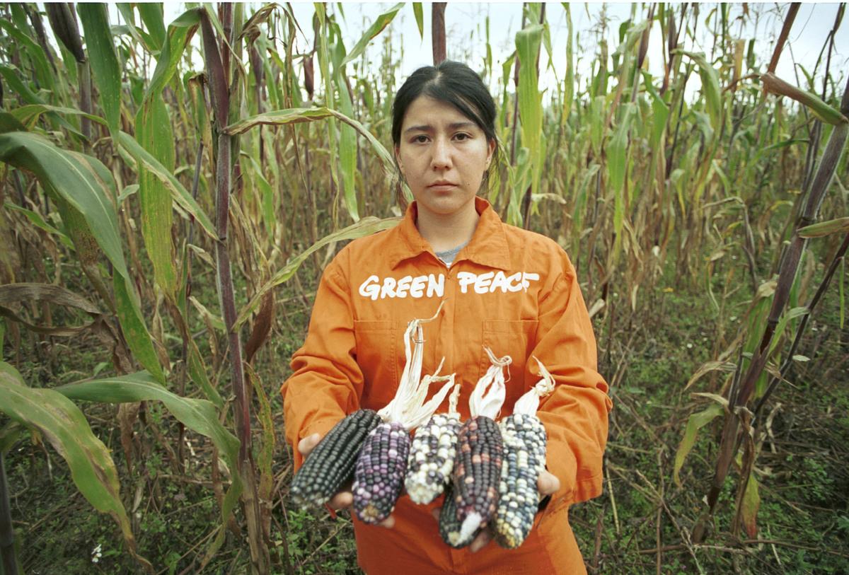 墨西哥種植的玉米,基本可自給自足,不需倚賴進口基因改造。更重要是種植基因改造玉米,會污染原生品種,且會助長農民使用危險農藥,危害公共健康,破壞生物多樣性。