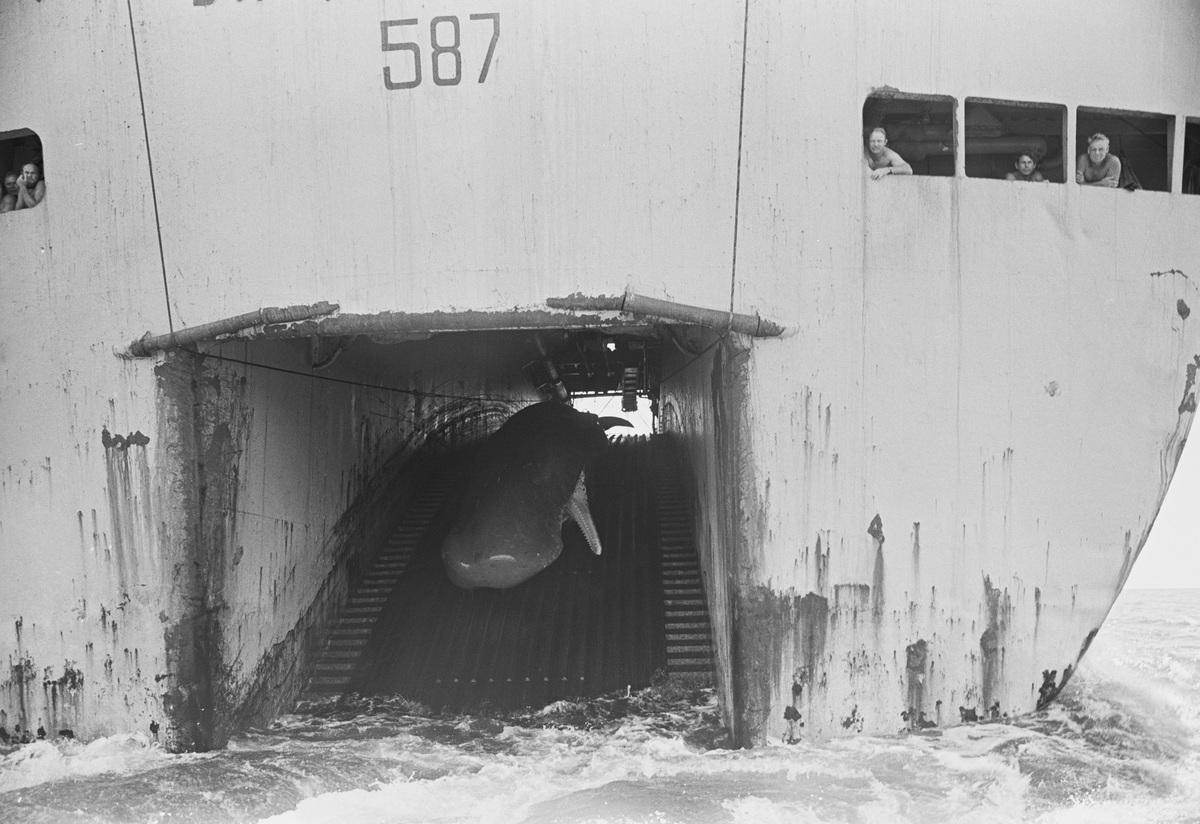 1976年,工業捕鯨船正將一隻死去的抹香鯨拖上甲板。