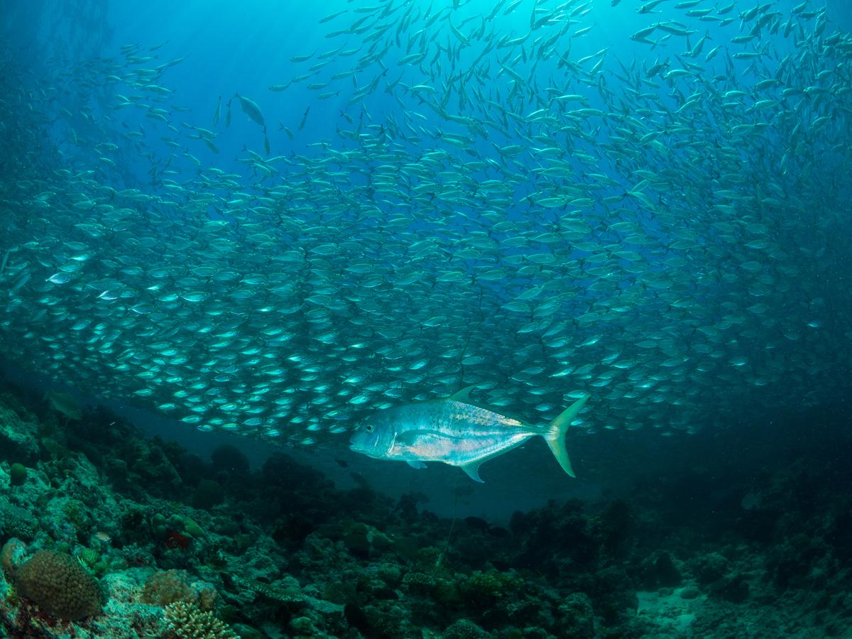 海洋世界的生態豐富且複雜,卻因人為侵擾和過度佔取資源,而逐漸邁向枯竭。如今需要強而有力的保護措施,才能讓大海休養生息,恢復往昔豐饒。