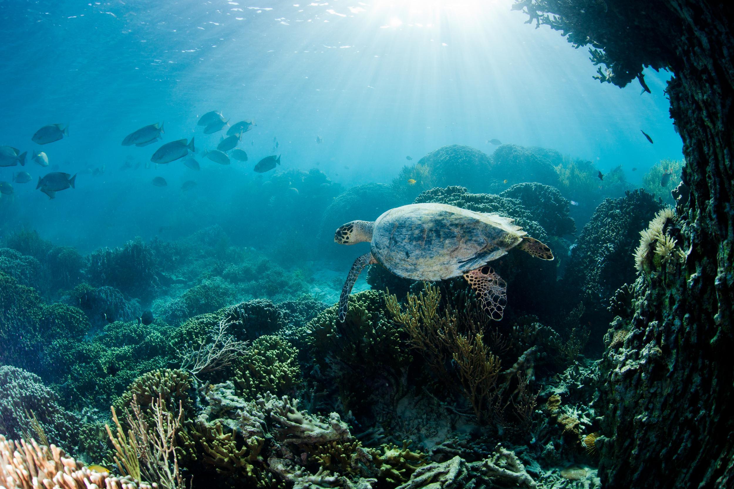廣袤無垠的蔚藍大海,蘊含豐富的的資源,全球超過 30 億人的生計及沿海社區全都仰仗海洋,守護海洋同時,也是守護人類的生機。© Paul Hilton / Greenpeace