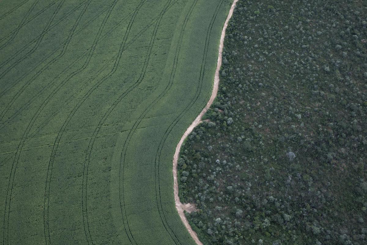 巴西Bahia州的大豆種植區。農場建於1975年,現已發展到305,000公頃,是紐約市面積的3倍。© Victor Moriyama / Greenpeace