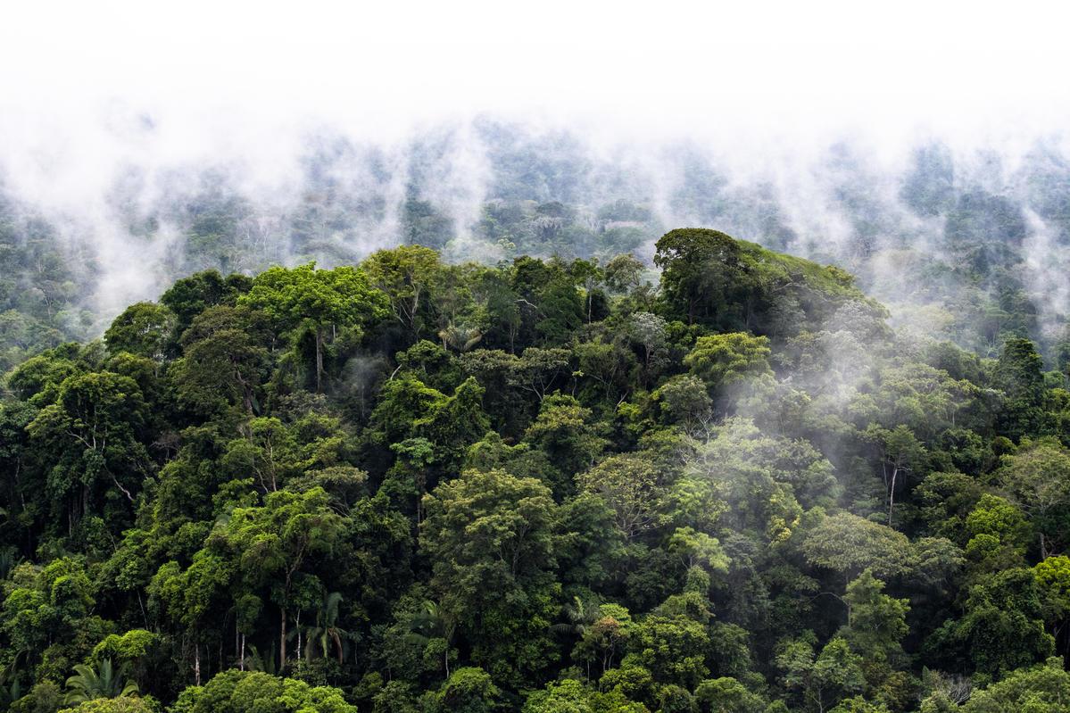 您知道嗎?照片中亞馬遜雨林裡的裊裊白煙,並不是自然形成的霧嵐,而是人類為商業利益放火毀林、破壞珍貴森林生態的證據。© Daniel Beltrá / Greenpeace