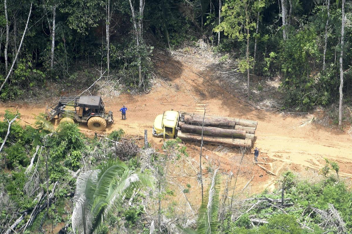 巴西亞馬遜的非法縱火、侵占土地與盜伐問題猖獗,許多當地原住民因此失去家園。