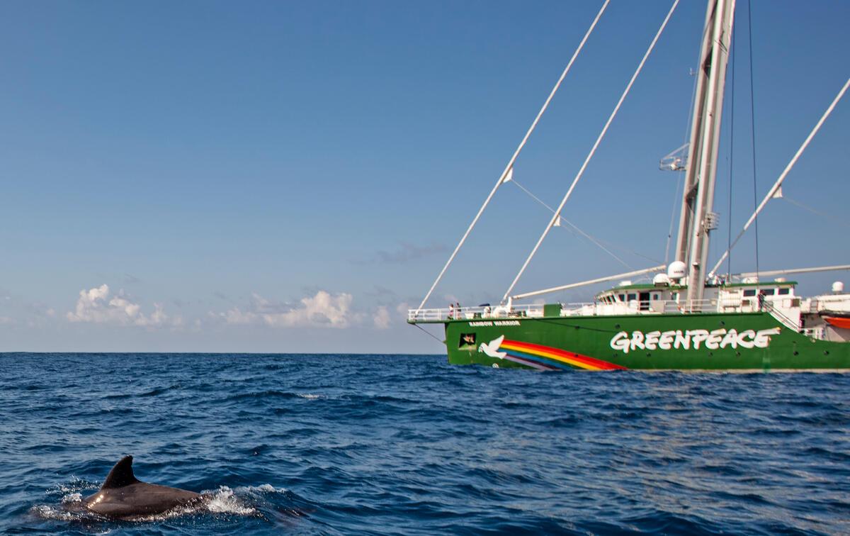綠色和平船艦彩虹勇士號(Rainbow Warrior)於加勒比海啟程,準備展開為期3個月的太平洋海洋見證之旅,進入太平洋後遇見海豚靠近。