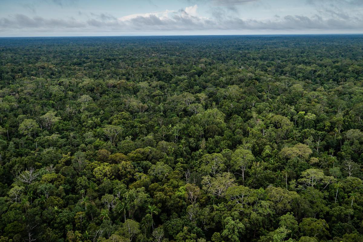 印尼擁有全球面積第三大的熱帶雨林,然而在經濟掛帥大肆開發下,如今僅存部分巴布亞森林仍未被迫晦,是印尼「最後的雨林」,亟須被守護。© Ulet Ifansasti / Greenpeace