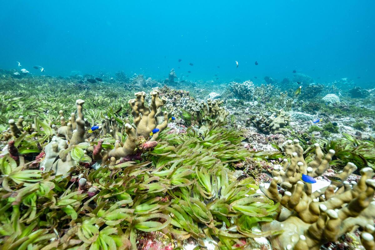 海草是個生態豐富的小社區,許多生物在此棲息、覓食,是海洋食物鏈中不可或缺的角色。