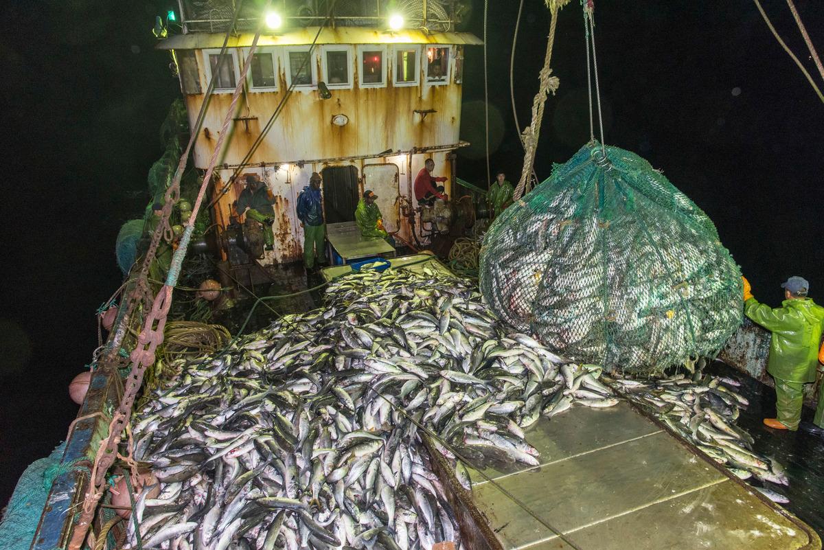 遠洋漁業的工業式漁撈,是造成海洋資源耗竭的主因之一,必須以更嚴謹的規範並制定永續政策,甚至設立全球海洋保護區,才能確保海洋生物多樣性。
